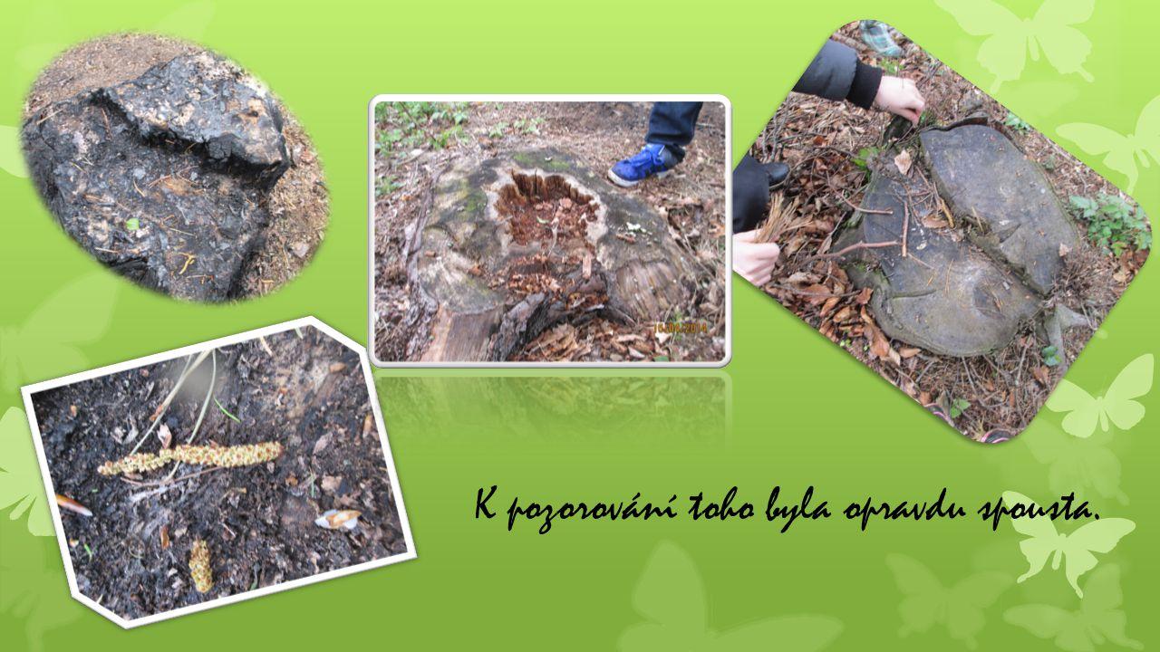 Dozvěděli jsme se, že později bude tato oblast oplocena a znovu osázena novými stromky.