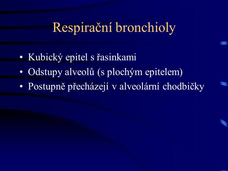 Plíce Respirační bronchy Alveolární chodbičky Alveoly Pleura