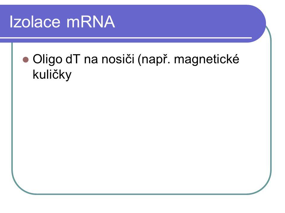 Primers pro revezní transkripci Oligo dT Univerzální, nižší výtěžek, nízká Tm Random hexamers/dekamers Univerzální, vyšší výtěžek, krátké úseky, nízká Tm Specifický primer Specifický, vyšší výtěžek, vysoká Tm, primer možno použít pro následnou PCR