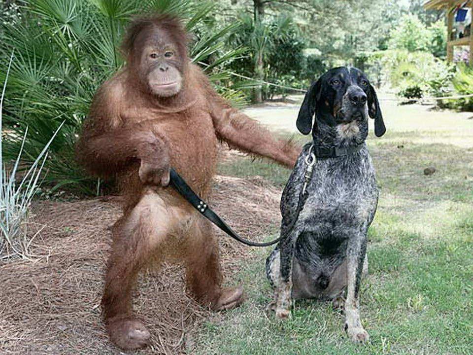 Poté, co ztratil své rodiče, tříletý orangutan byl v takové depresi, že odmítal cokoliv jíst a nereagoval dobře na léčbu. Veterináři vycítili, že je v