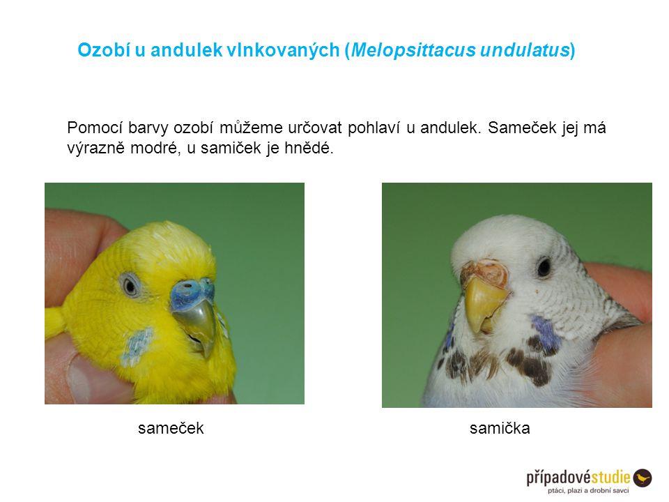 Ozobí u andulek vlnkovaných (Melopsittacus undulatus) samečeksamička Pomocí barvy ozobí můžeme určovat pohlaví u andulek. Sameček jej má výrazně modré