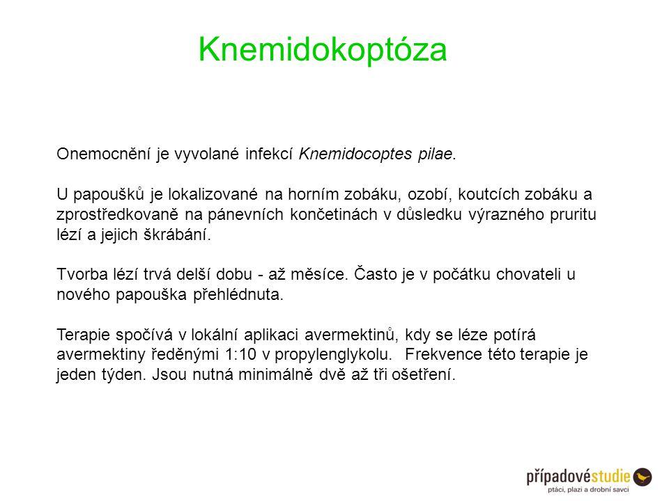 Knemidokoptóza Onemocnění je vyvolané infekcí Knemidocoptes pilae. U papoušků je lokalizované na horním zobáku, ozobí, koutcích zobáku a zprostředkova