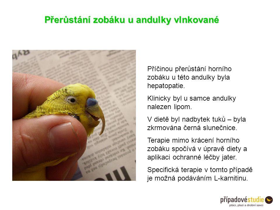 Přerůstání zobáku u andulky vlnkované Příčinou přerůstání horního zobáku u této andulky byla hepatopatie. Klinicky byl u samce andulky nalezen lipom.