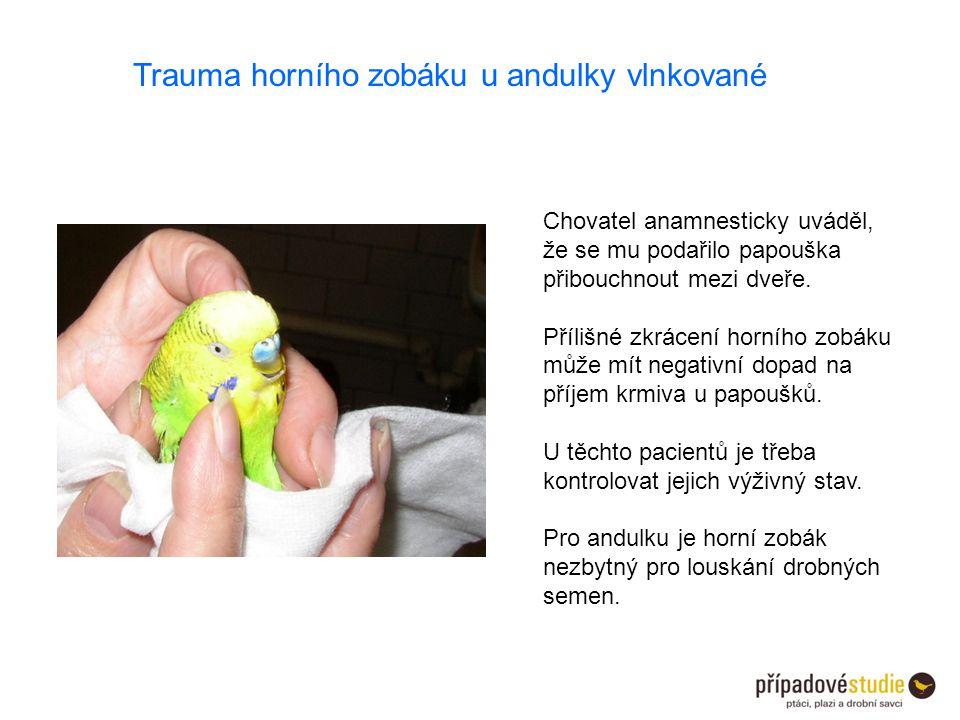 Trauma horního zobáku u andulky vlnkované Chovatel anamnesticky uváděl, že se mu podařilo papouška přibouchnout mezi dveře. Přílišné zkrácení horního