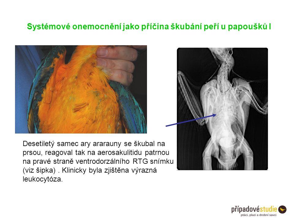 Systémové onemocnění jako příčina škubání peří u papoušků I Desetiletý samec ary ararauny se škubal na prsou, reagoval tak na aerosakulitidu patrnou n