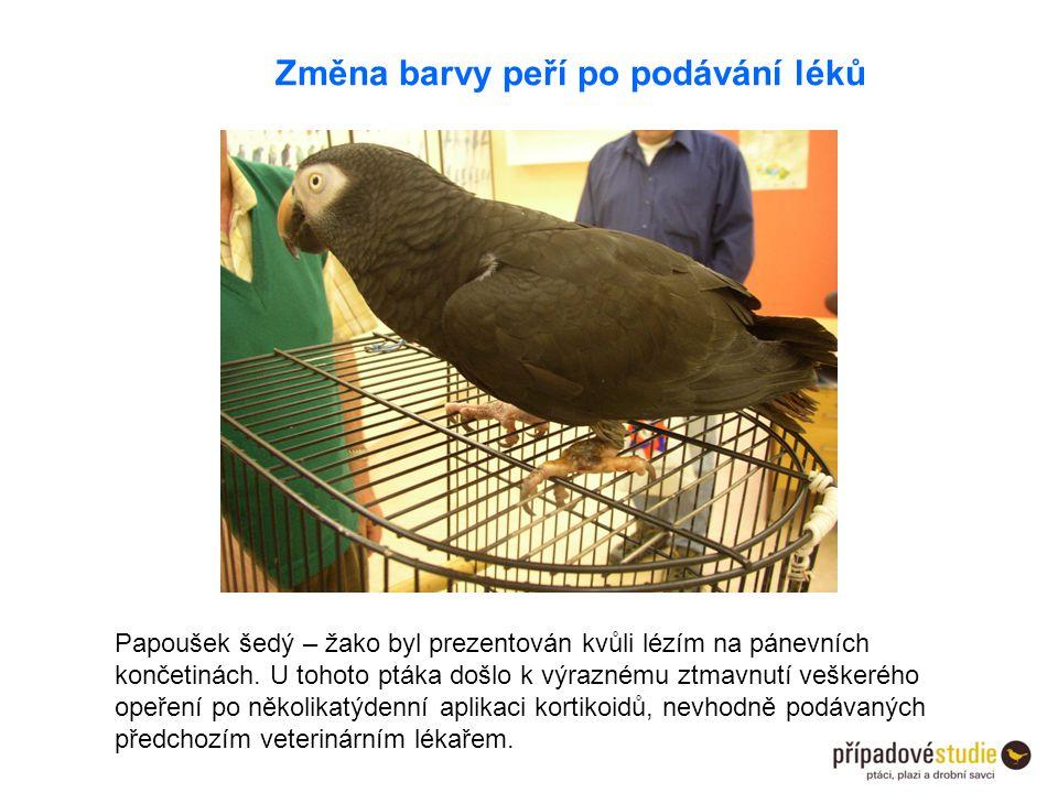 Změna barvy peří po podávání léků Papoušek šedý – žako byl prezentován kvůli lézím na pánevních končetinách. U tohoto ptáka došlo k výraznému ztmavnut