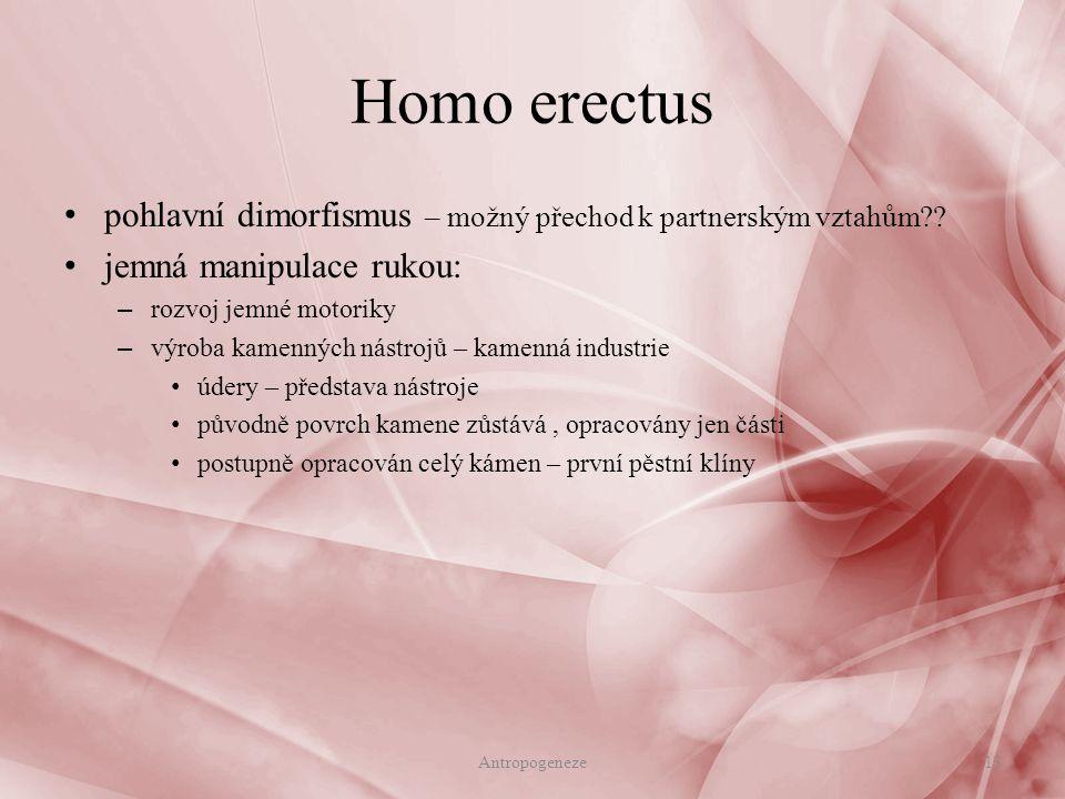 pohlavní dimorfismus – možný přechod k partnerským vztahům?? jemná manipulace rukou: – rozvoj jemné motoriky – výroba kamenných nástrojů – kamenná ind
