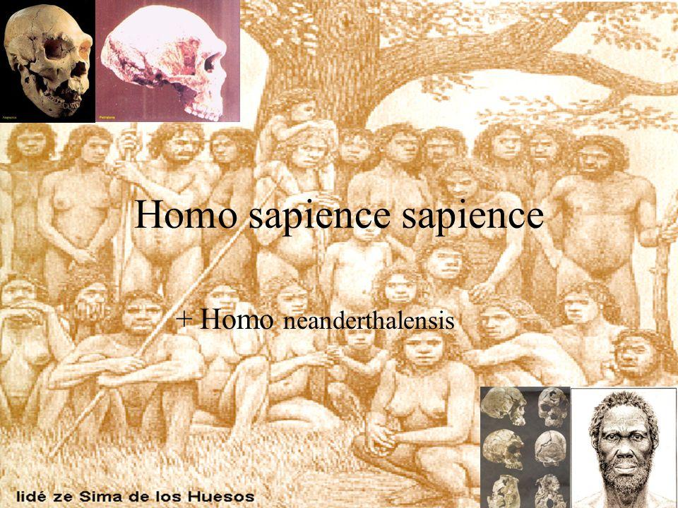 Homo sapience sapience + Homo neanderthalensis