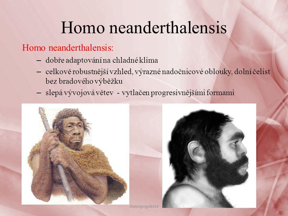 Homo neanderthalensis Homo neanderthalensis: – dobře adaptování na chladné klima – celkově robustnější vzhled, výrazné nadočnicové oblouky, dolní čelist bez bradového výběžku – slepá vývojová větev - vytlačen progresivnějšími formami 17Antropogeneze