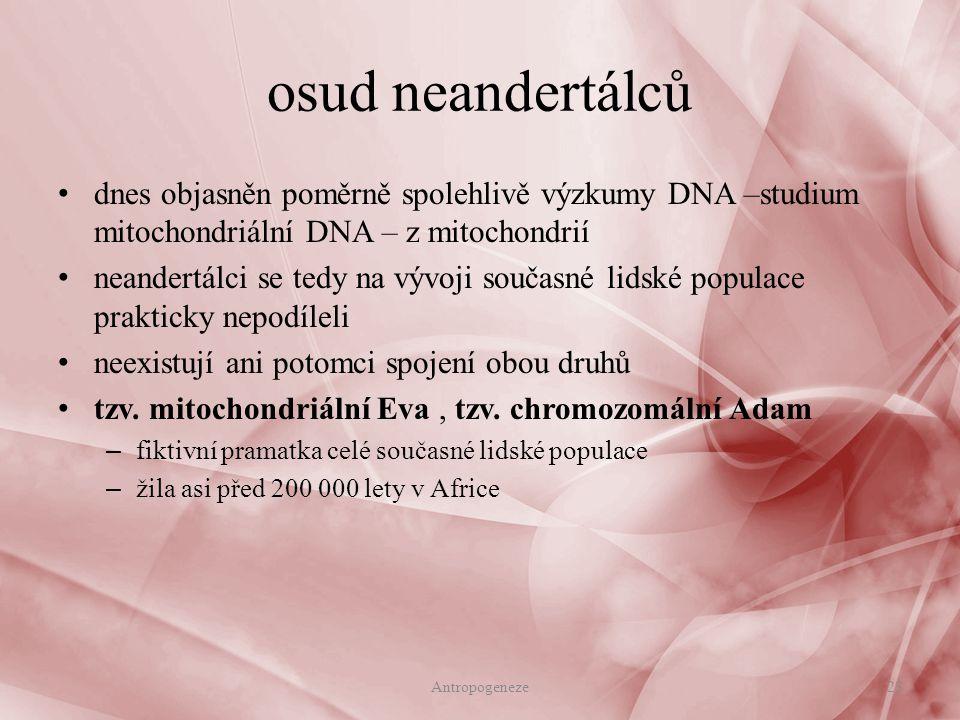 osud neandertálců dnes objasněn poměrně spolehlivě výzkumy DNA –studium mitochondriální DNA – z mitochondrií neandertálci se tedy na vývoji současné lidské populace prakticky nepodíleli neexistují ani potomci spojení obou druhů tzv.