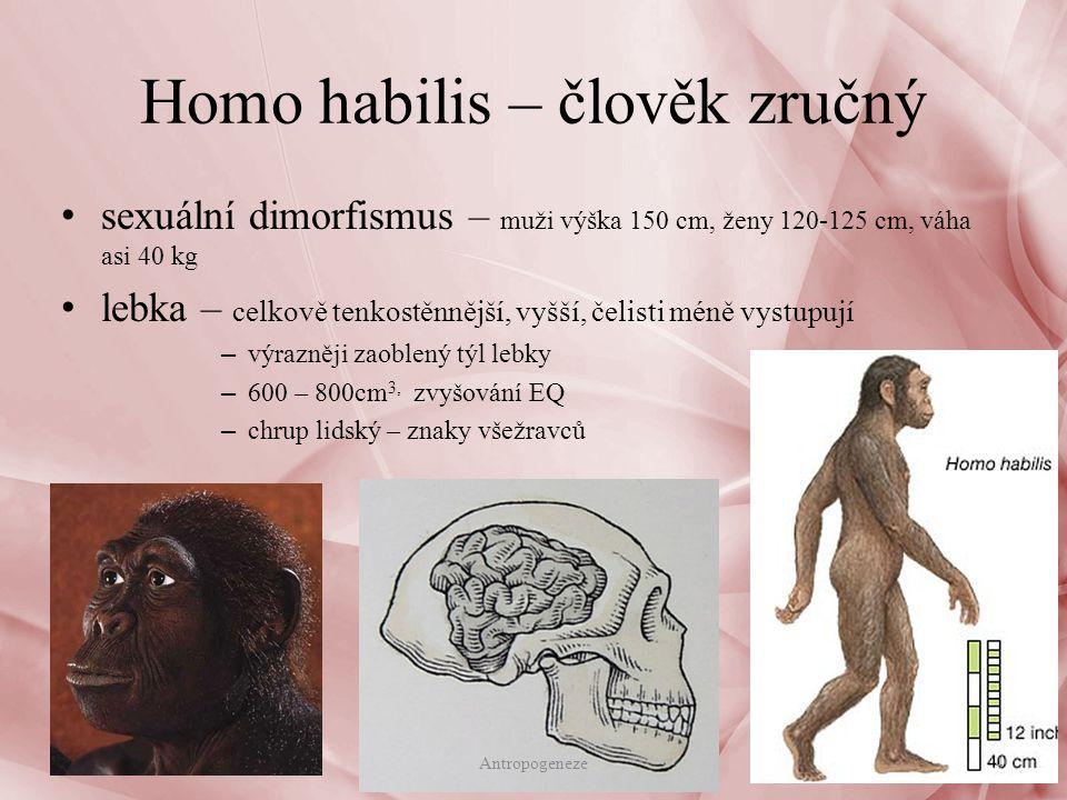 sexuální dimorfismus – muži výška 150 cm, ženy 120-125 cm, váha asi 40 kg lebka – celkově tenkostěnnější, vyšší, čelisti méně vystupují – výrazněji zaoblený týl lebky – 600 – 800cm 3, zvyšování EQ – chrup lidský – znaky všežravců Homo habilis – člověk zručný 4Antropogeneze