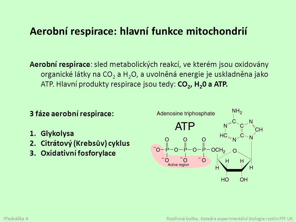 Aerobní respirace: hlavní funkce mitochondrií Aerobní respirace: sled metabolických reakcí, ve kterém jsou oxidovány organické látky na CO 2 a H 2 O,