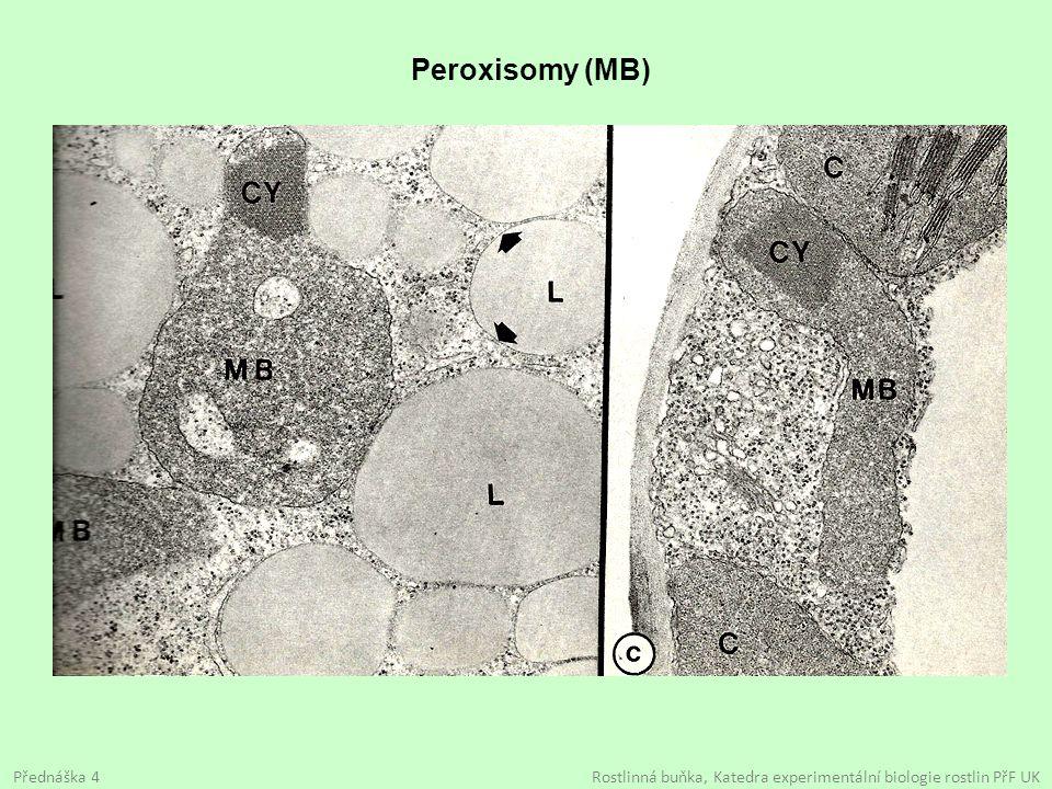 Peroxisomy (MB) Přednáška 4 Rostlinná buňka, Katedra experimentální biologie rostlin PřF UK