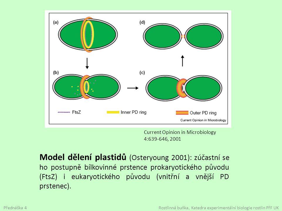 Model dělení plastidů (Osteryoung 2001): zúčastní se ho postupně bílkovinné prstence prokaryotického původu (FtsZ) i eukaryotického původu (vnitřní a