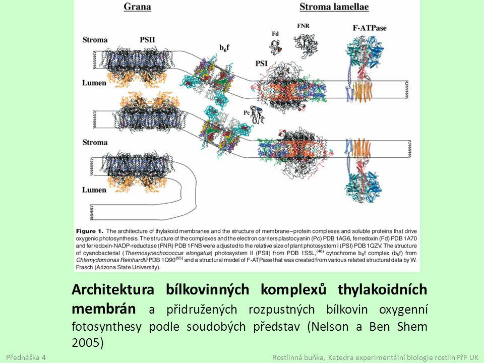 Architektura bílkovinných komplexů thylakoidních membrán a přidružených rozpustných bílkovin oxygenní fotosynthesy podle soudobých představ (Nelson a
