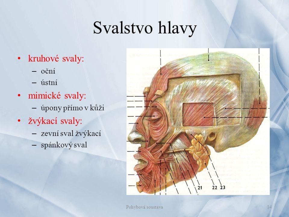 Svalstvo hlavy kruhové svaly: – oční – ústní mimické svaly: – úpony přímo v kůži žvýkací svaly: – zevní sval žvýkací – spánkový sval 14Pohybová sousta
