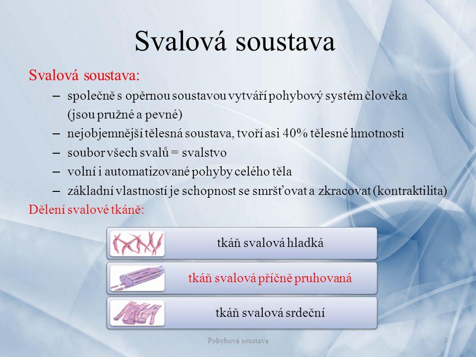 Svalová soustava Svalová soustava: – společně s opěrnou soustavou vytváří pohybový systém člověka (jsou pružné a pevné) – nejobjemnější tělesná sousta