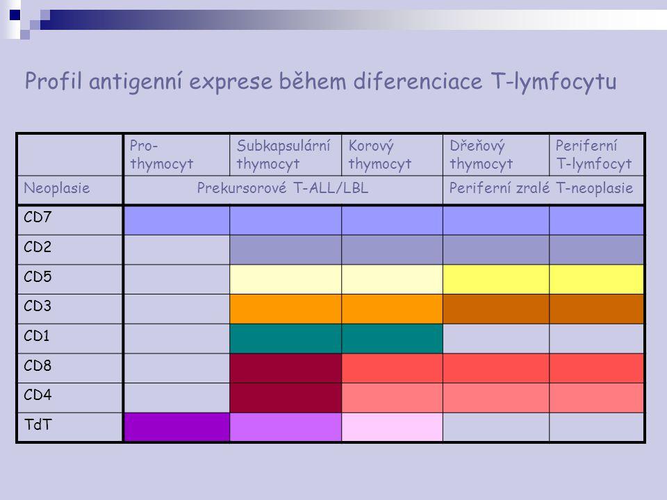 Profil antigenní exprese během diferenciace T-lymfocytu Pro- thymocyt Subkapsulární thymocyt Korový thymocyt Dřeňový thymocyt Periferní T-lymfocyt Neo