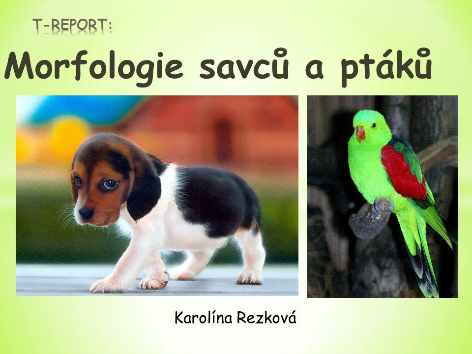 Morfologie savců a ptáků Karolína Rezková