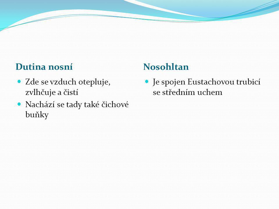 Hrtan Hrtanová příklopka ve svrchní části hrtanu zabraňuje vniknutí sousta do dýchacích cest Hrtan tvoří chrupavky, největší tzv.