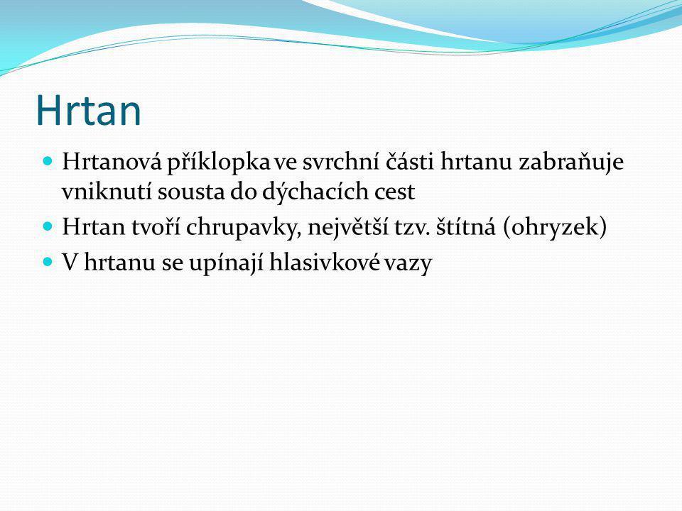 Hrtan Hrtanová příklopka ve svrchní části hrtanu zabraňuje vniknutí sousta do dýchacích cest Hrtan tvoří chrupavky, největší tzv. štítná (ohryzek) V h