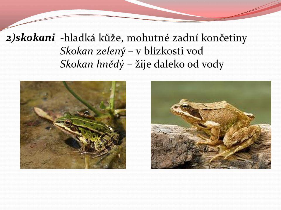 2)skokani -hladká kůže, mohutné zadní končetiny Skokan zelený – v blízkosti vod Skokan hnědý – žije daleko od vody