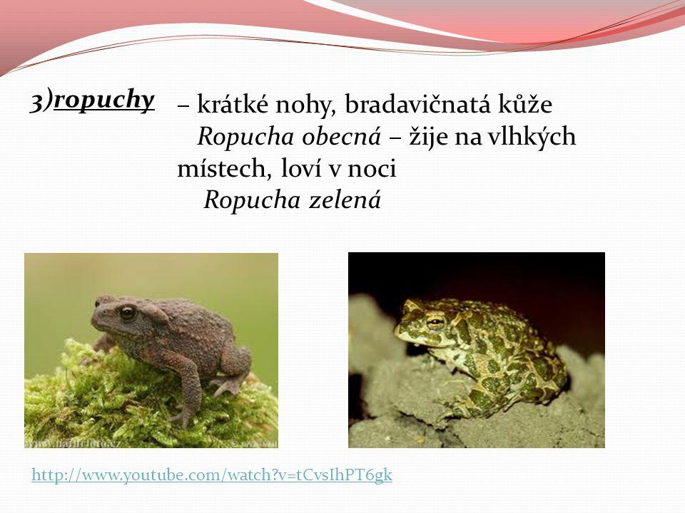 3)ropuchy – krátké nohy, bradavičnatá kůže Ropucha obecná – žije na vlhkých místech, loví v noci Ropucha zelená http://www.youtube.com/watch?v=tCvsIhP