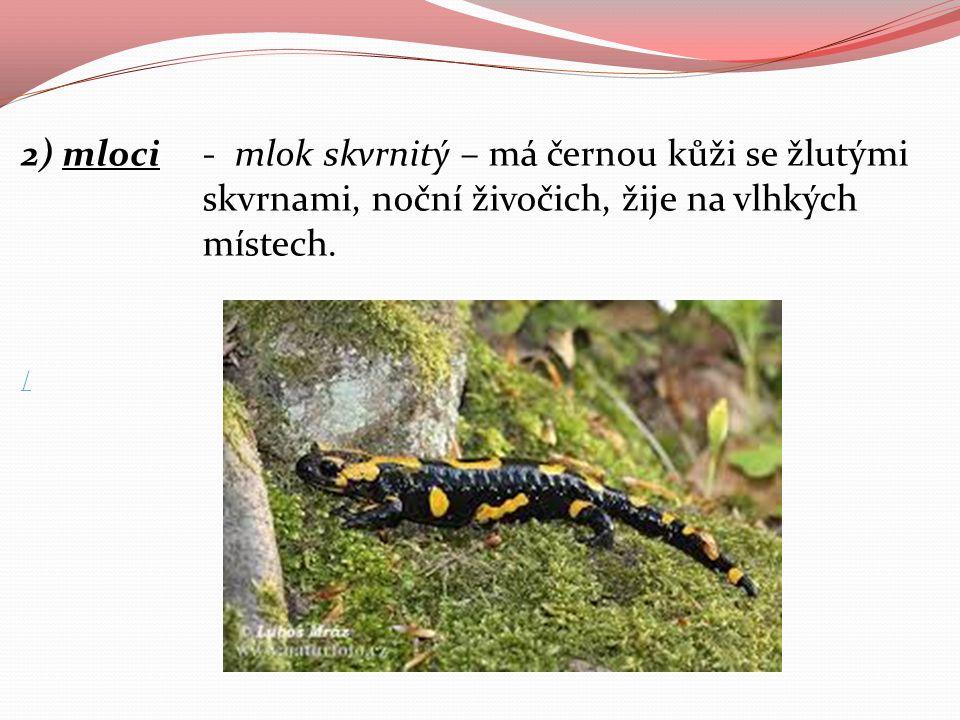 2) mloci- mlok skvrnitý – má černou kůži se žlutými skvrnami, noční živočich, žije na vlhkých místech. /