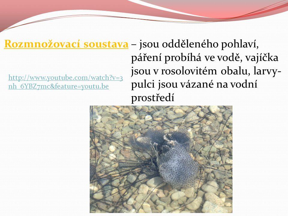a) rozmnožování bezocasých – žáby-oplození je vnější, pulci mají vnější žábry (později i vnitřní), mají ocas (později zaniká) a nemají končetiny-nejprve rostou zadní, živí se rostlinou potravou
