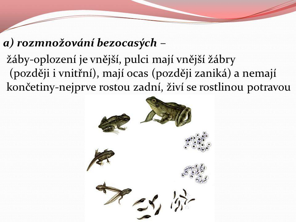 a) rozmnožování bezocasých – žáby-oplození je vnější, pulci mají vnější žábry (později i vnitřní), mají ocas (později zaniká) a nemají končetiny-nejpr