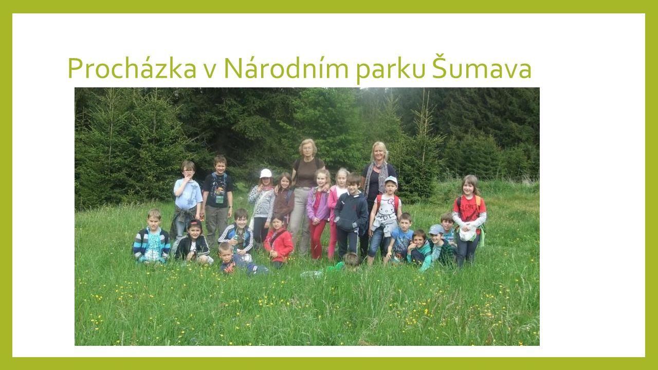 Procházka v Národním parku Šumava