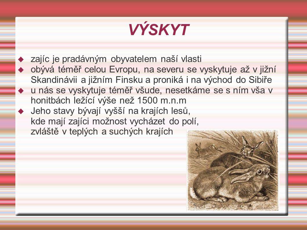 ZPŮSOB ŽIVOTA  Zajíc žije jednotlivě, pase se za šera, ráno a večer nebo v noci.