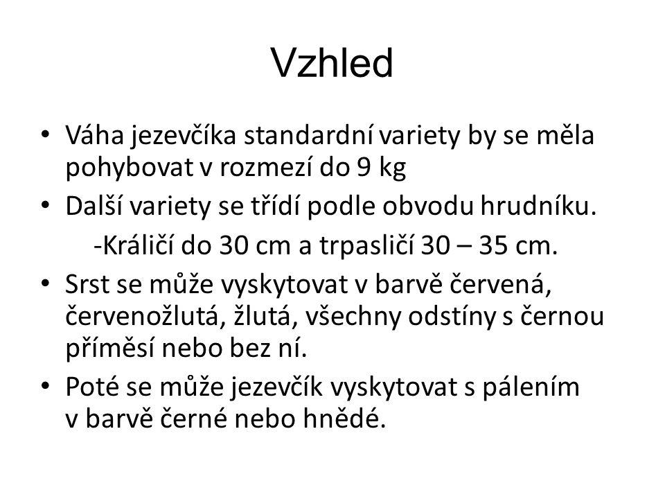 Vzhled Váha jezevčíka standardní variety by se měla pohybovat v rozmezí do 9 kg Další variety se třídí podle obvodu hrudníku. -Králičí do 30 cm a trpa