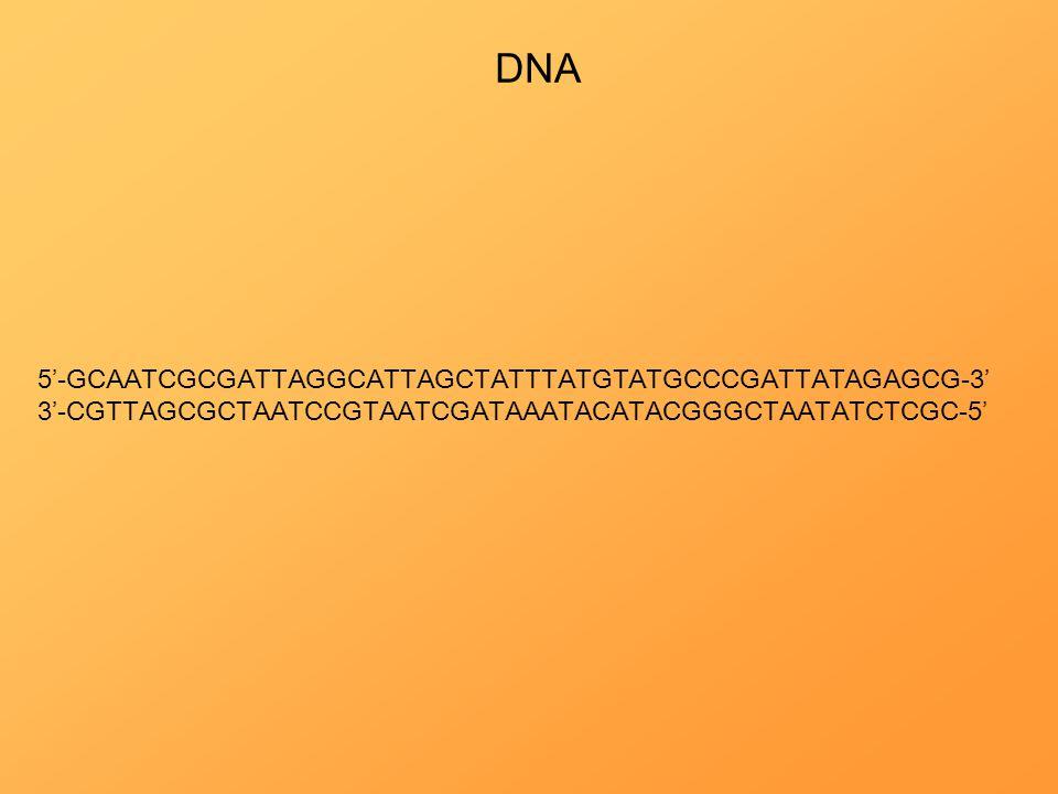 DNA 5'-GCAATCGCGATTAGGCATTAGCTATTTATGTATGCCCGATTATAGAGCG-3' 3'-CGTTAGCGCTAATCCGTAATCGATAAATACATACGGGCTAATATCTCGC-5'
