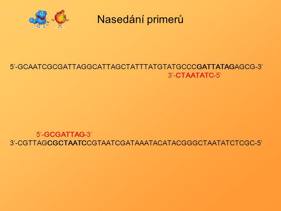 Nasedání primerů 5'-GCAATCGCGATTAGGCATTAGCTATTTATGTATGCCCGATTATAGAGCG-3' 3'-CTAATATC-5' 5'-GCGATTAG-3' 3'-CGTTAGCGCTAATCCGTAATCGATAAATACATACGGGCTAATAT