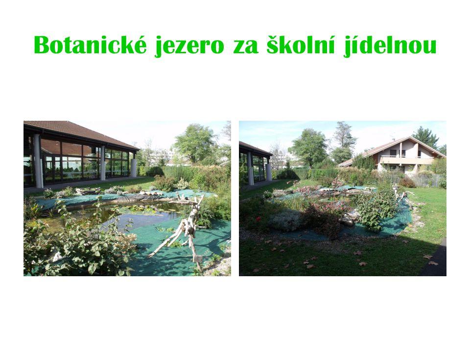Botanické jezero za školní jídelnou