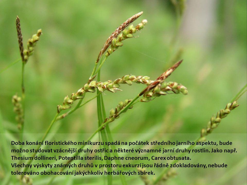 Doba konání floristického minikurzu spadá na počátek středního jarního aspektu, bude možno studovat vzácnější druhy ostřic a některé významné jarní dr