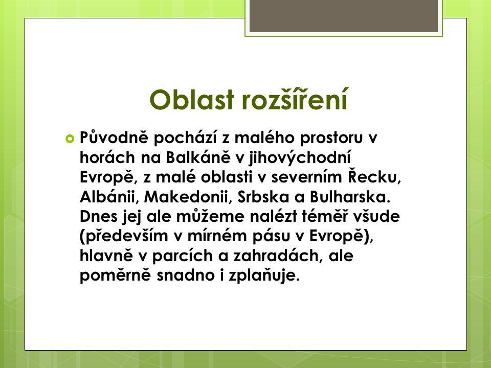 Oblast rozšíření  Původně pochází z malého prostoru v horách na Balkáně v jihovýchodní Evropě, z malé oblasti v severním Řecku, Albánii, Makedonii, Srbska a Bulharska.