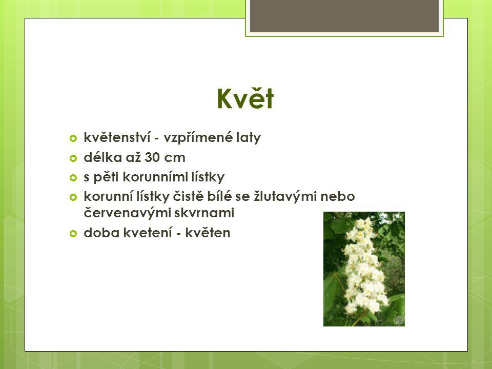 Květ  květenství - vzpřímené laty  délka až 30 cm  s pěti korunními lístky  korunní lístky čistě bílé se žlutavými nebo červenavými skvrnami  doba kvetení - květen