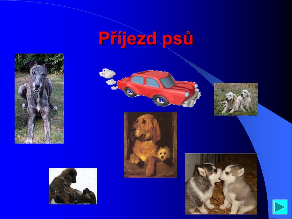 Obsah Příjezd psů Popis těla psa Pár kousků na ukázku Jedinečný psí štěkot A konec psů a prezentace