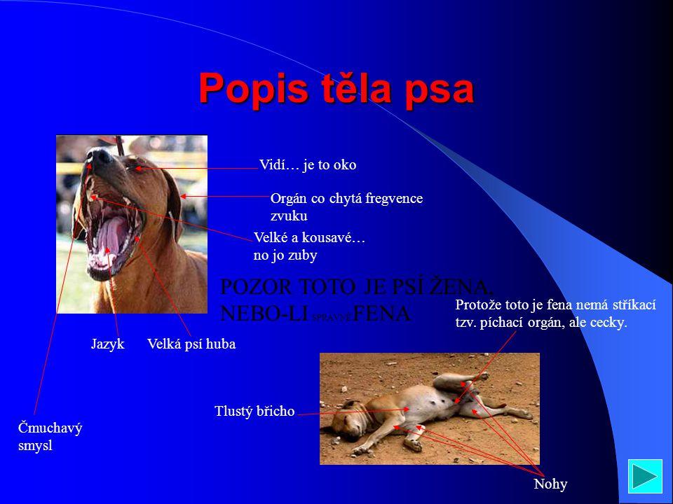 Popis těla psa Vidí… je to oko Orgán co chytá fregvence zvuku Velké a kousavé… no jo zuby Velká psí hubaJazyk Čmuchavý smysl POZOR TOTO JE PSÍ ŽENA, NEBO-LI SPRÁVNĚ FENA Tlustý břicho Nohy Protože toto je fena nemá stříkací tzv.