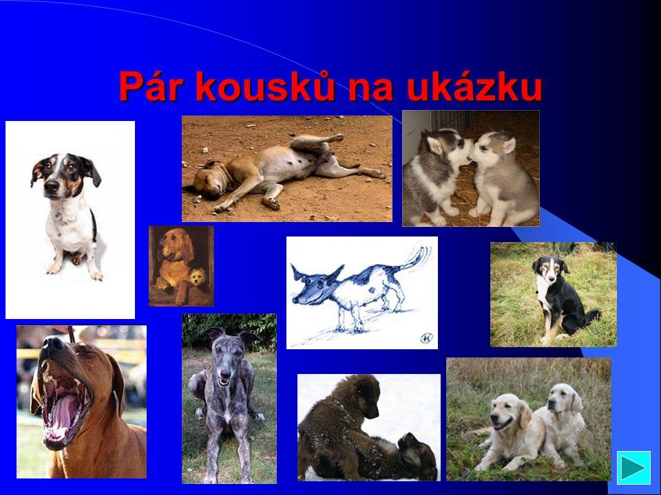 Popis těla psa Vidí… je to oko Orgán co chytá fregvence zvuku Velké a kousavé… no jo zuby Velká psí hubaJazyk Čmuchavý smysl POZOR TOTO JE PSÍ ŽENA, N