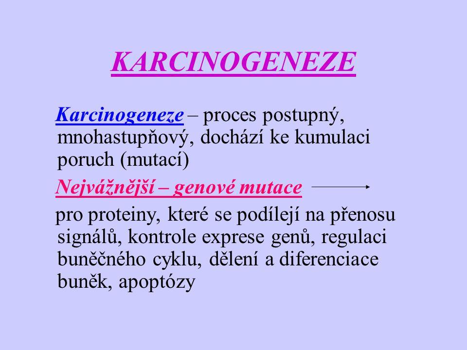 KARCINOGENEZE Karcinogeneze – proces postupný, mnohastupňový, dochází ke kumulaci poruch (mutací) Nejvážnější – genové mutace pro proteiny, které se p