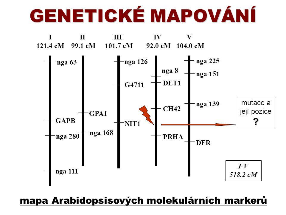 GENETICKÉ MAPOVÁNÍ I-V 518.2 cM I 121.4 cM II 99.1 cM III 101.7 cM IV 92.0 cM V 104.0 cM nga 63 nga 225 nga 8 nga 111 nga 151 nga 126 GPA1 DFR PRHA NI