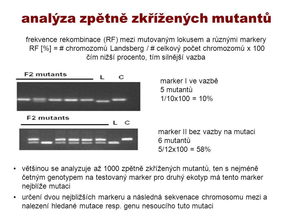 analýza zpětně zkřížených mutantů většinou se analyzuje až 1000 zpětně zkřížených mutantů, ten s nejméně četným genotypem na testovaný marker pro druh