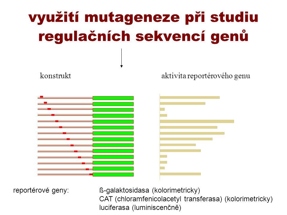 využití mutageneze při studiu regulačních sekvencí genů konstruktaktivita reportérového genu reportérové geny:ß-galaktosidasa (kolorimetricky) CAT (ch