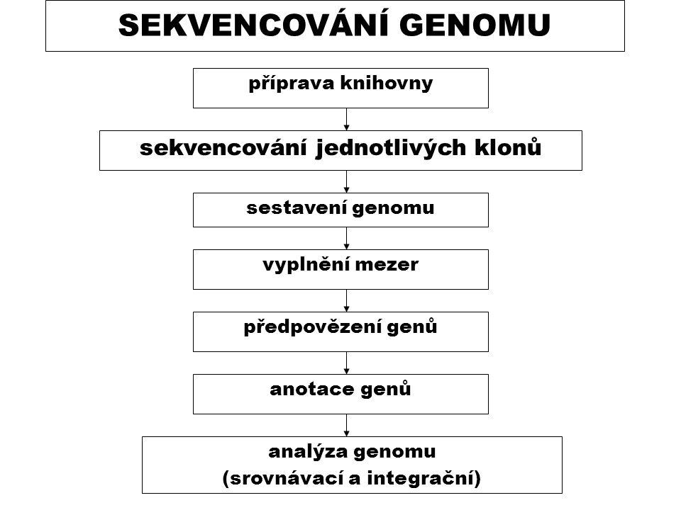 SEKVENCOVÁNÍ GENOMU sekvencování jednotlivých klonů sestavení genomu vyplnění mezer příprava knihovny předpovězení genů anotace genů analýza genomu (s