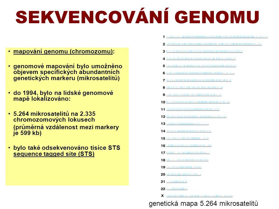 SEKVENCOVÁNÍ GENOMU mapování genomu (chromozomu): genomové mapování bylo umožněno objevem specifických abundantních genetických markeru (mikrosatelitů