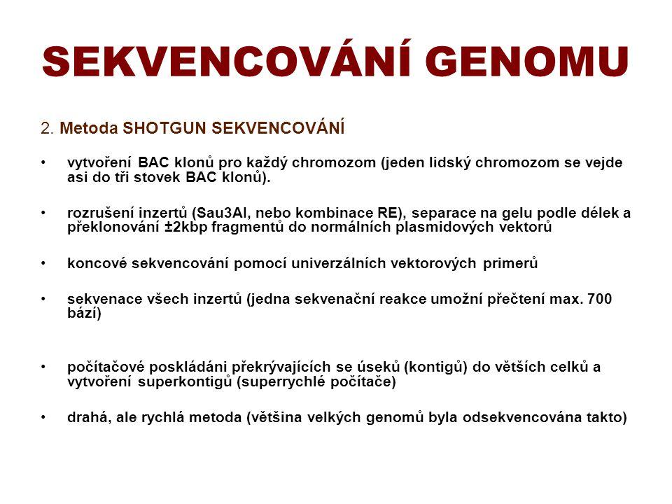 2. Metoda SHOTGUN SEKVENCOVÁNÍ vytvoření BAC klonů pro každý chromozom (jeden lidský chromozom se vejde asi do tři stovek BAC klonů). rozrušení inzert