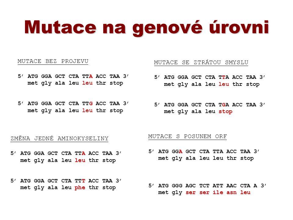 OSTATNÍ ODSEKVENOVANÉ GENOMY OSTATNÍ ODSEKVENOVANÉ GENOMY první odsekvenovaný genom žijícího organismu Haemophilus influenzae 1995 baktérie způsobující zánět mozkových blan u dětí organismusVelikost (Mbp)počet genů člověk (Homo sapiens) lidská mitochondriální DNA 3.200 0.016 20-25.000 32 laboratorní myš (M.